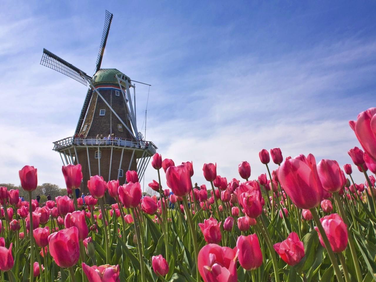 olanda paesi bassi
