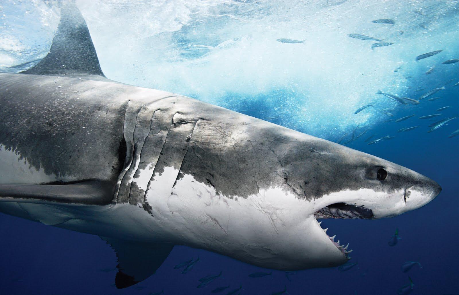 squalo speculazione